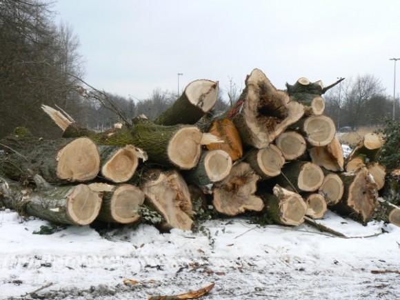 Früher richtig grünes Wilhelmsburg - jetzt Abholzung total für IBA und igs